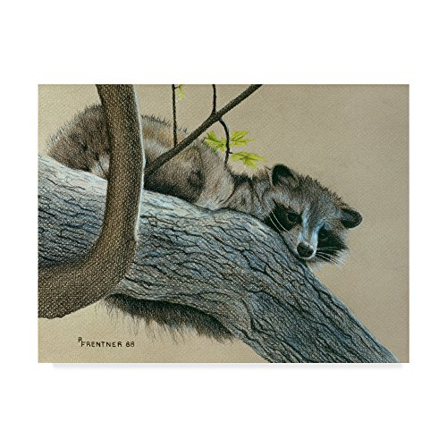 Trademark Fine Art Raccoon by Rusty Frentner, 14x19-Inch (Raccoon Rusty)