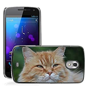 Hot Style Cell Phone PC Hard Case Cover // M00117356 Cat Feline Pet // Samsung Galaxy Nexus GT-i9250 i9250