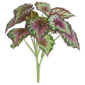 18 Inch Painted Leaf Begonia Bush Signature Foliage 87