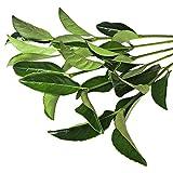 Farm Fresh Natural Viburnum Greens - 100 stems
