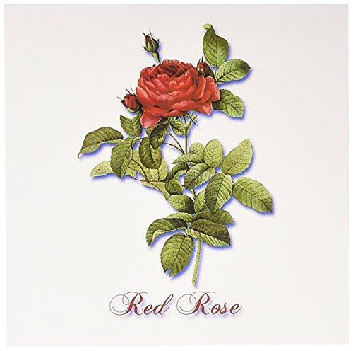 Botanical Roses (3dRose Dark Red Rose Botanical Print - Greeting Cards, 6 x 6