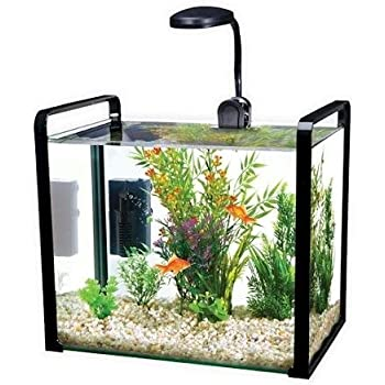 Penn plax parallel 2 5 gallon designer glass for 5 gallon glass fish tank