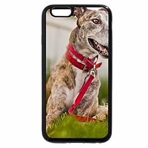 iPhone 6S / iPhone 6 Case (Black) Playfull dog