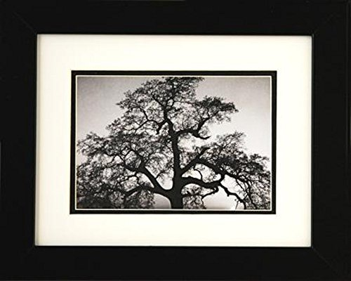 Adams Ansel Art - Professionally Framed Oak Tree and Sunset by Ansel Adams Black & White Photograph 8x10 Famous Photographer GREAT ART