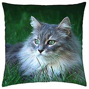 Beautiful Long-Haired Cat - Throw Pillow Cover Case (18