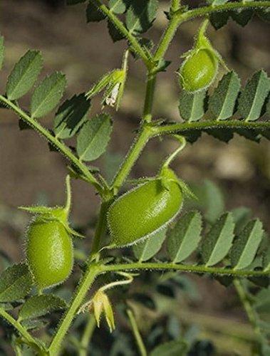Lentejas verdes Bio by Food to Live (Eco, Ecológico, granos secos enteros, no transgénicos, crudos, germinados, Kosher, a granel) - 15 libras: Amazon.es: ...