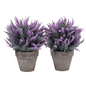 MARJON FlowersFake Artificial Potted Grass Plants Flowers - Small Purple, Pack of 2, Home and Office Decoration Desktop Windowsill Bonsai Indoor Gift for Wedding Birthday Christmas 26