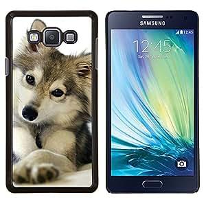 EJOOY---Cubierta de la caja de protección para la piel dura ** Samsung Galaxy A7 A7000 ** --lindo cachorro de lobo invierno nieve perro mascota