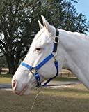 ADJUSTABLE HORSE HALTER WITH LEATHER HEADPOLE - YEARLING - BLUE