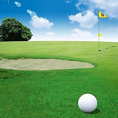 Yaoyodd19 10000Pcs Festuca Arundinacea Seeds Soccer Field Golf Course Lawn Grass Decor - Festuca Arundinacea Seeds : Garden & Outdoor