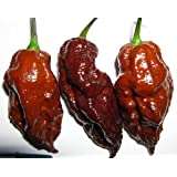 Chocolate Bhut Jolokia Chile Pepper 10 Seed - Extreme Hot - Ghost Pepper
