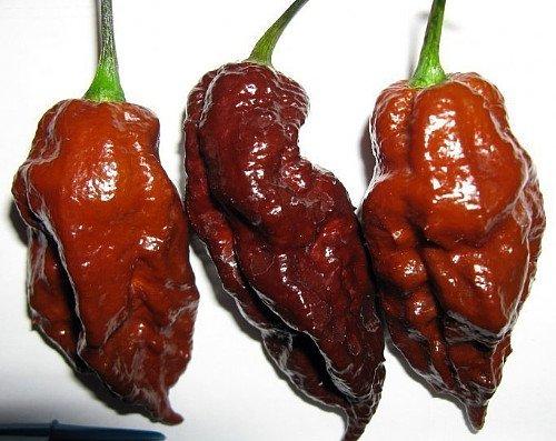 Chocolate Bhutlah Chili Recipe