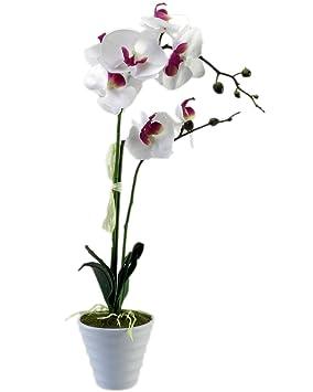 orchidee 2 rispen
