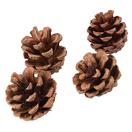 Foerteng Natural Wooden Toy Small Animal Toy Hamster Pine Cone for Decoration, Small Animal Playground Chew Toy for Mouse and Dwarf Hamster Mice, 4 Pieces
