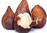 10 salacca/zalacca/Salak/Snake Fruit Seeds Exotic Fruit from Thailand