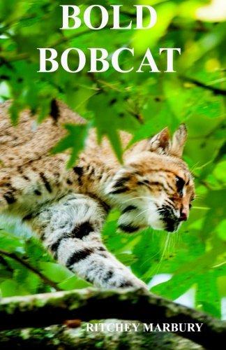 bold-bobcat