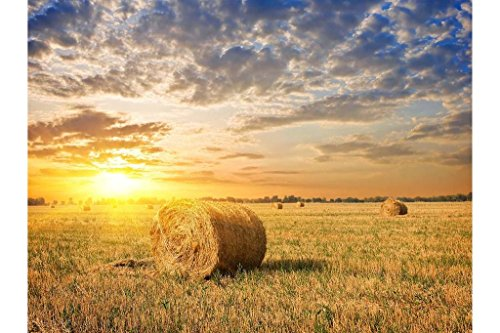 PigBangbang,Handmade Intellectiv Games 29.5 X 19.6'' Premium Basswood Can DIY 1000 piece Nice Painting Present To Lover,Friend ect Mural Home Decoration- Farm Field Grass Hay Sunset Clouds