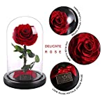Beauty-and-The-Beast-Red-Rose-Enchanted-Red-Real-Rose-Handmade-Preserved-Rose-with-Gift-Package-Romantic-Forever-Gift-for-Mothers-Day-Valentines-Day-Anniversary-Wedding-Birthday