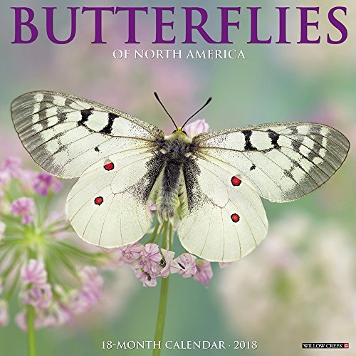 Butterfly Calendar - Butterflies of North America 2018 Calendar