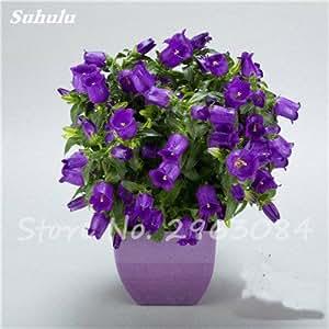 100 Pcs Campanula Semillas Semillas de flor de la planta de Bonsai raras para jardín plantados en el suelo orgánico plantas ornamentales fácil de cultivar 5