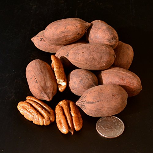 New Crop 2016 Texas Pecans Inshell, Organic, 12 Oz.