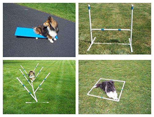 Agility Gear Starter Package with Tippy Board Teeter Totter Dog