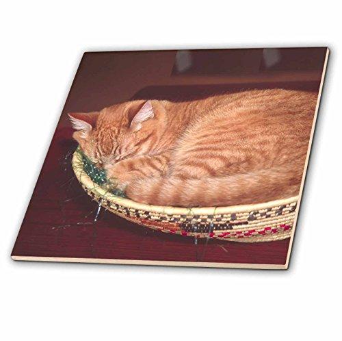 3dRose Orange Tabby Cat Asleep in an Easter Basket - Na02 Csl0214 - Charles Sleicher - Ceramic Tile, 4-Inch (ct_83708_1)