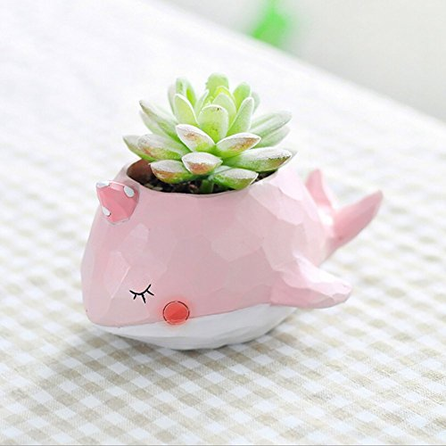 WISH HALLY WOOD pink Whale Succulent Planter Pots for Office House Balcony Landscape Creative Decorative Flower Pots (Pink ()