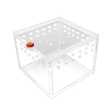 Yanhonin - Caja de alimentación para Reptiles, acrílico, Jaula de ...