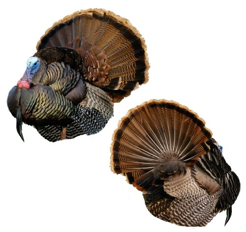 Montana Decoy Mr T 2D Strutter Decoy