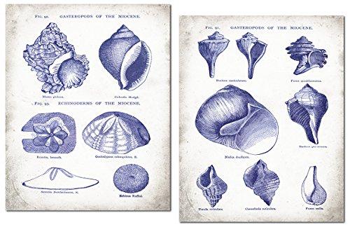 Vintage-Ephemera-Style-Blue-Sea-Shell-Set-Coastal-Decor-2-11x14in-Poster-Prints