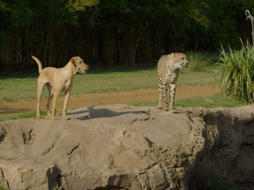 Juvenile Form - Animal Odd Couples