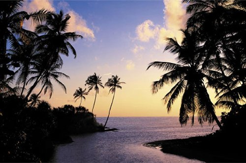 HUGE LAMINATED / ENCAPSULATED Hikkaduwa Beach Palms Paradise