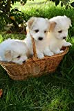 Three Adorable Creamy White Puppy Dogs in a Basket Journal: Lined Notebook/Diary