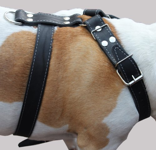 xl dog harness bulldog - 4