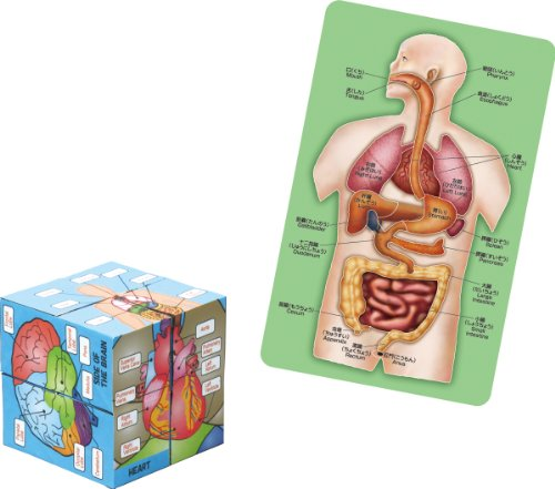 Mechanism of the body to learn playing human body cube & Puzzle (japan import) ()