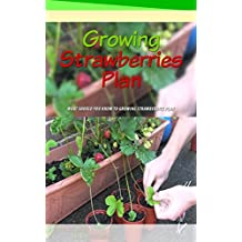 Growing Strawberries Plan: What Should You Know to Growing Strawberries Plan