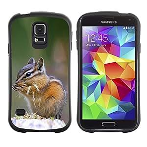 Suave TPU Caso Carcasa de Caucho Funda para Samsung Galaxy S5 SM-G900 / Cute Chipmunk Squirrel / STRONG