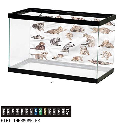 bybyhome Fish Tank Backdrop Cat,Funny Playful Baby Kitten Pet,Aquarium Background,36