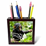 3dRose Danita Delimont - Baby animals - Africa, Uganda, Kibale NP. An infant chimpanzee plays with a stick. - 5 inch tile pen holder (ph_276639_1)