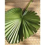 Foglia di palma artificiale a ventaglio, Ø 20 cm, 62 cm - Foglia decorativa / Decorazione tropicale - artplants