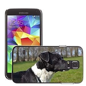 Etui Housse Coque de Protection Cover Rigide pour // M00115631 Perro Primavera Agua Dulce de verano // Samsung Galaxy S5 S V SV i9600 (Not Fits S5 ACTIVE)