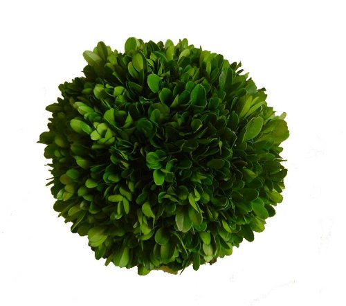 Mills Floral Company Boxwood Ball 6''