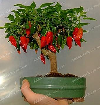 Amazon com: Thai Vegetable Seeds Chili Peppers Seeds Edible