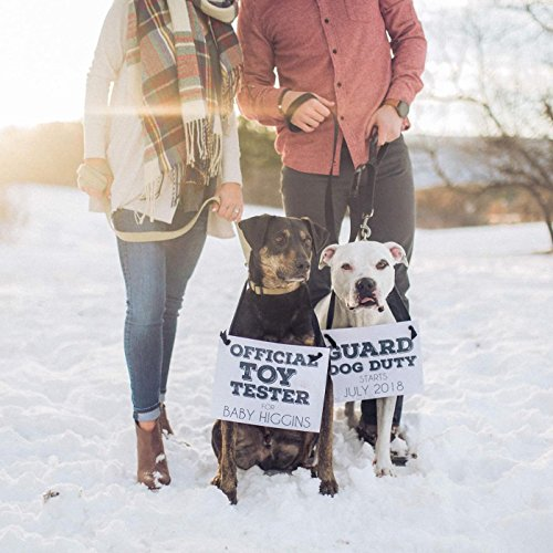 2 Dog Signs for Pregnancy Annou