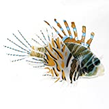 TOOGOO(R) Aquarium Plastic Floating Glowing Wiggling Tail Lionfish Ornament