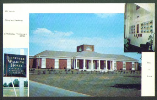 Tennessee Walking Horse Association Lewisburg TN postcard 1960s (Tn Walking Horse)