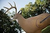 Field Logic 722007 Shooter Big Buck Replacement