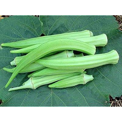 Burmese Okra Seeds (100 Seeds) : Garden & Outdoor