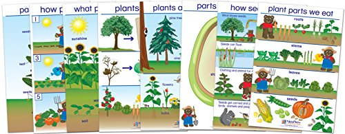 NewPath Learning 94-0221 All About Plants Bulletin Board Chart Set, English Edition (Pack of ()